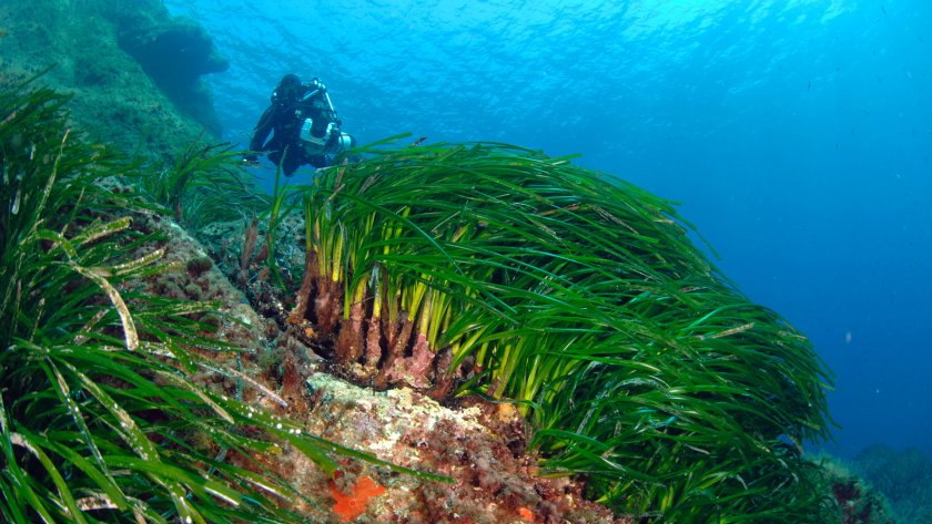 marine biologists & posidonia